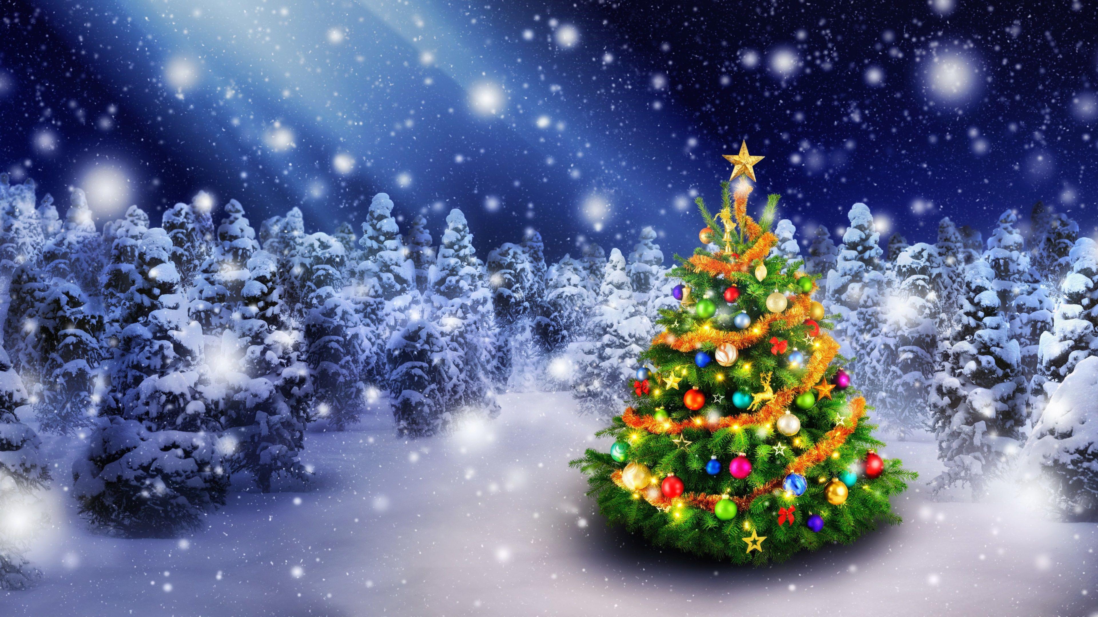 3840x2160 Christmas Tree 4k Free Full Hd Wallpaper Colorful Christmas Tree Christmas Tree Photography Christmas Tree Decorations
