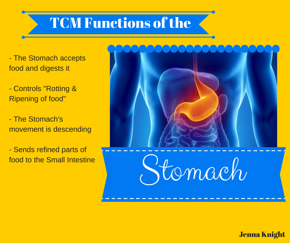 Tcm Functions Of The Stomach Tcm Career Pinterest