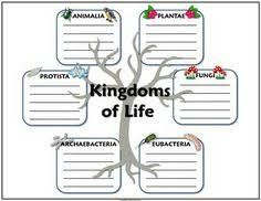 Image result for classification of living things foldable
