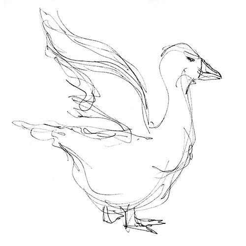 Scribble Line Gesture Drawing : Duck gesture drawing animal drawings pinterest