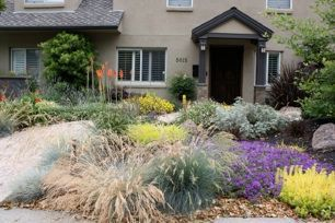 drought resistant front yard