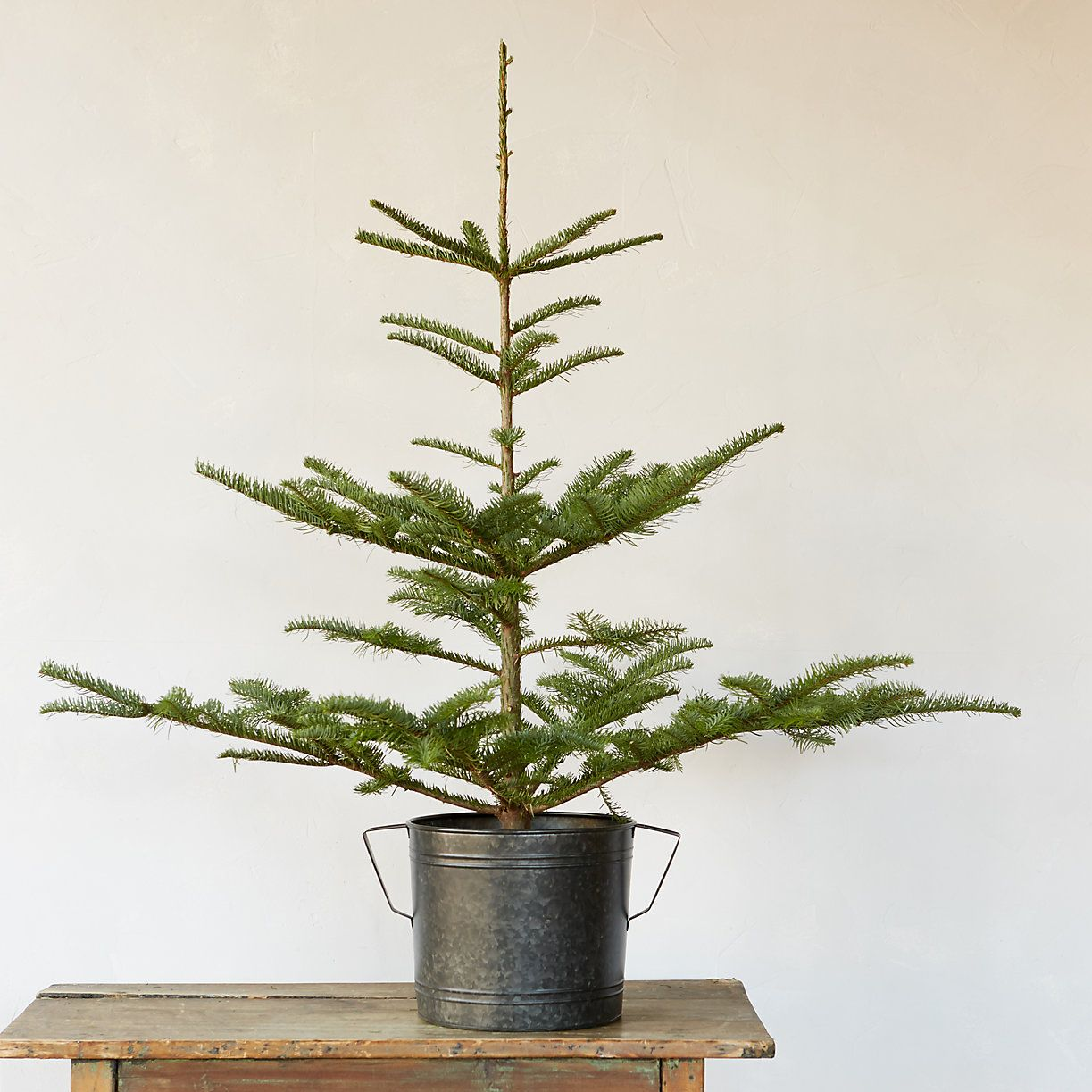 not everybody has room for a monster christmas tree weve rounded up 10 tiny live or fresh cut trees and topiaries just right for a tabletop or front - Live Tabletop Christmas Trees