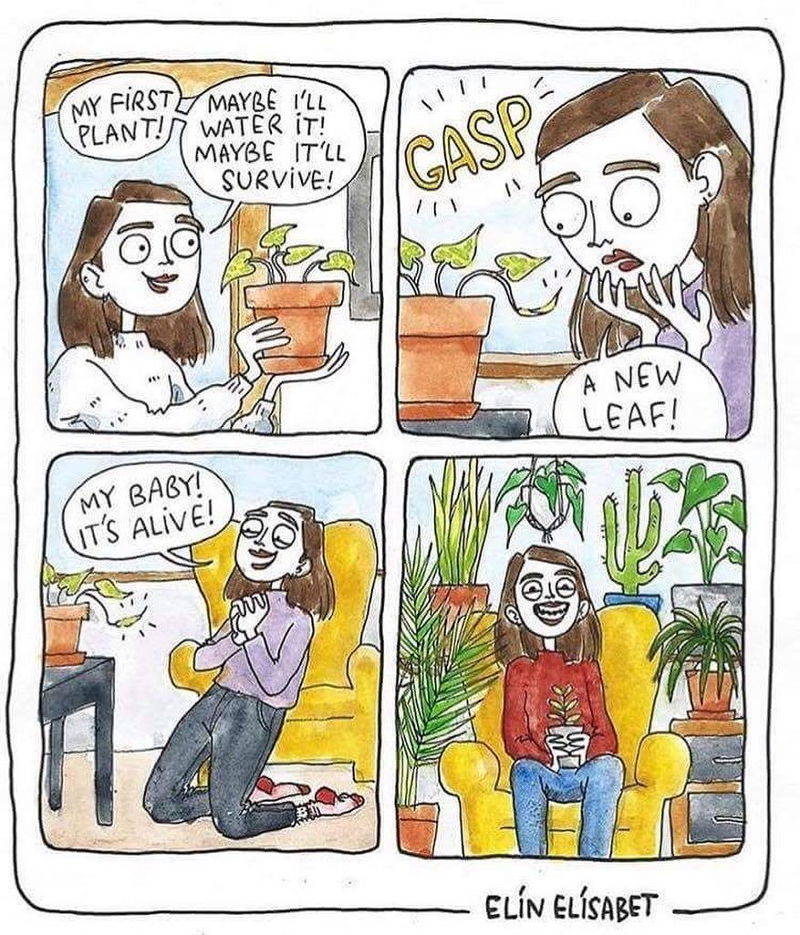 House Plant Community On Instagram The Daily Life Of A Crazy Plant Lady Follow Tag Us To Be Featured C Plant Cartoon Plant Jokes Plant Lady