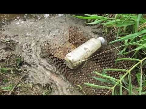 medicine : dinosaur scene was carefully transported vehicles,cây thuốc - YouTube