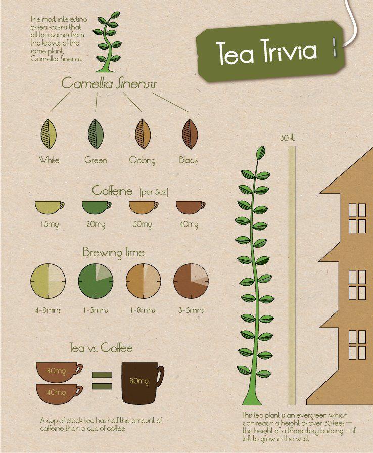 Tea Trivia c/o David's Tea