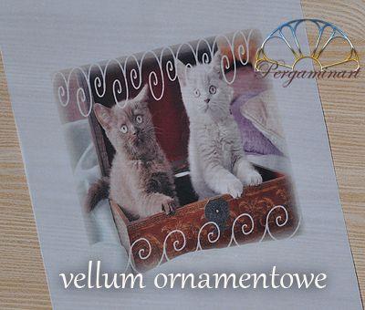 Technika Pergaminowa Kalka Pergaminowa Hamster Animals Vellum