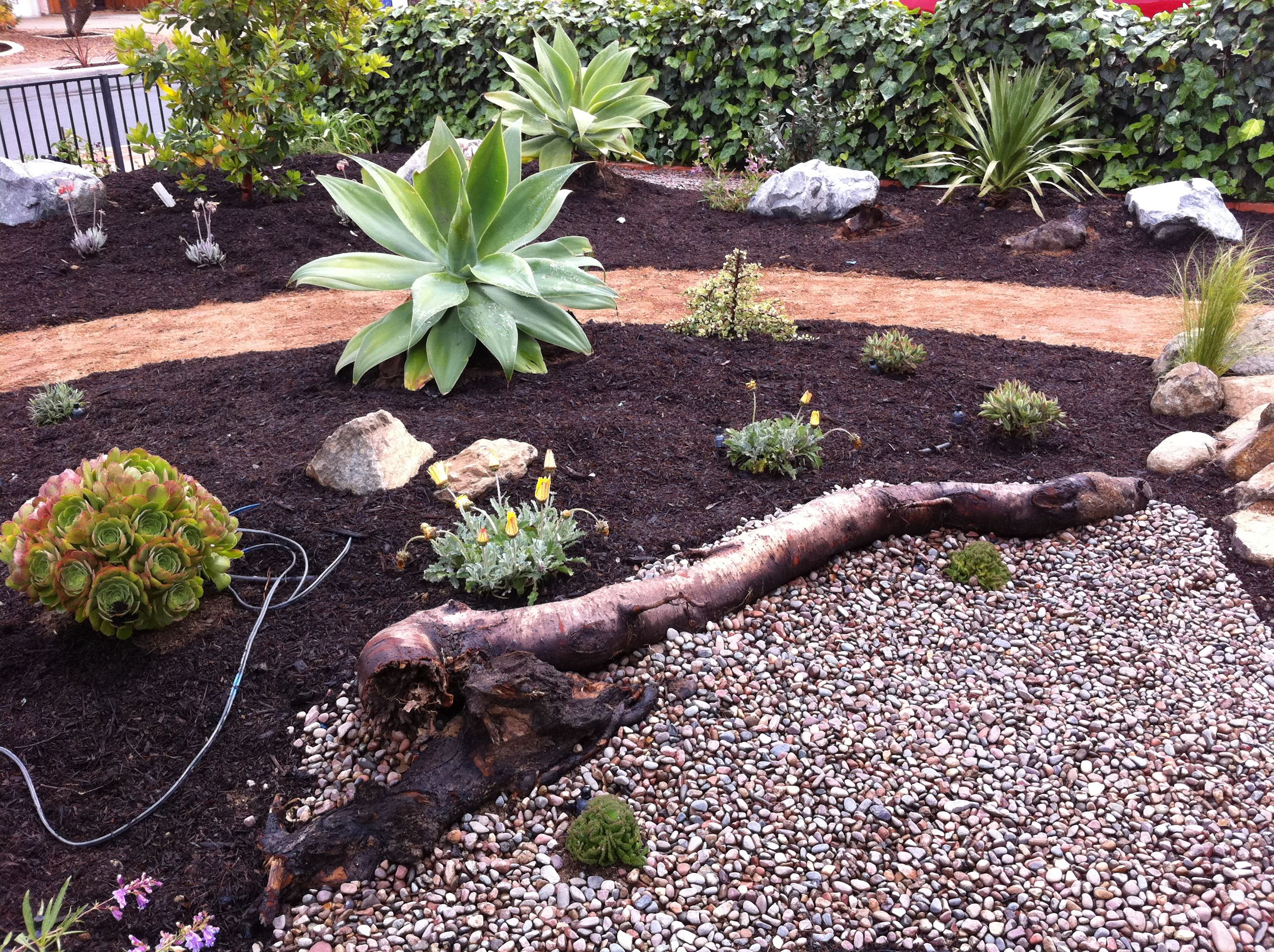 Xeriscape landscaping san diego xeriscape garden june 27 for Landscaping rocks albuquerque
