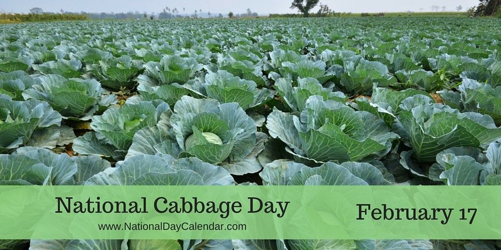 NATIONAL CABBAGE DAY February 17 Cabbage, National day