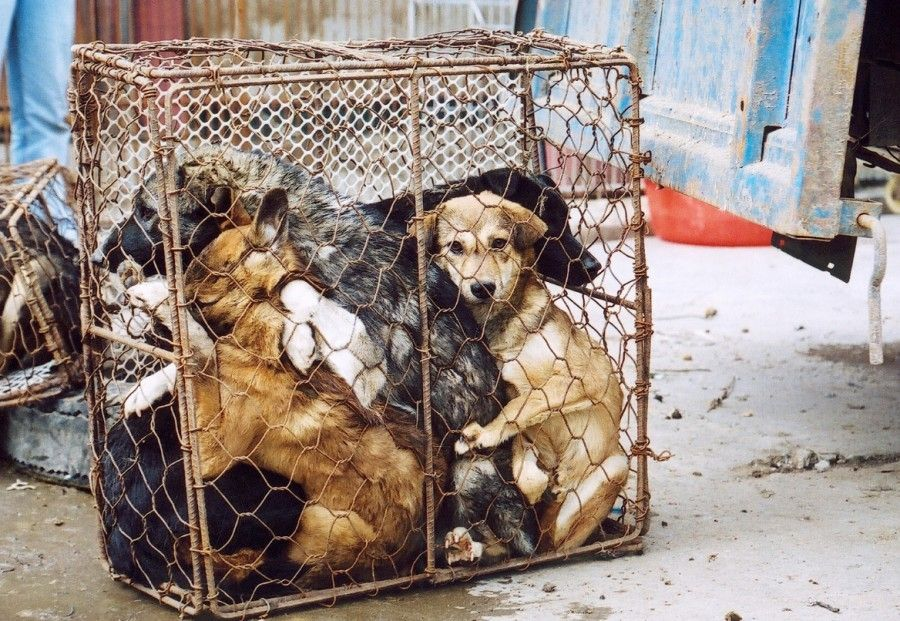Petition China Dogs Hit In The Head With Sticks For Food In