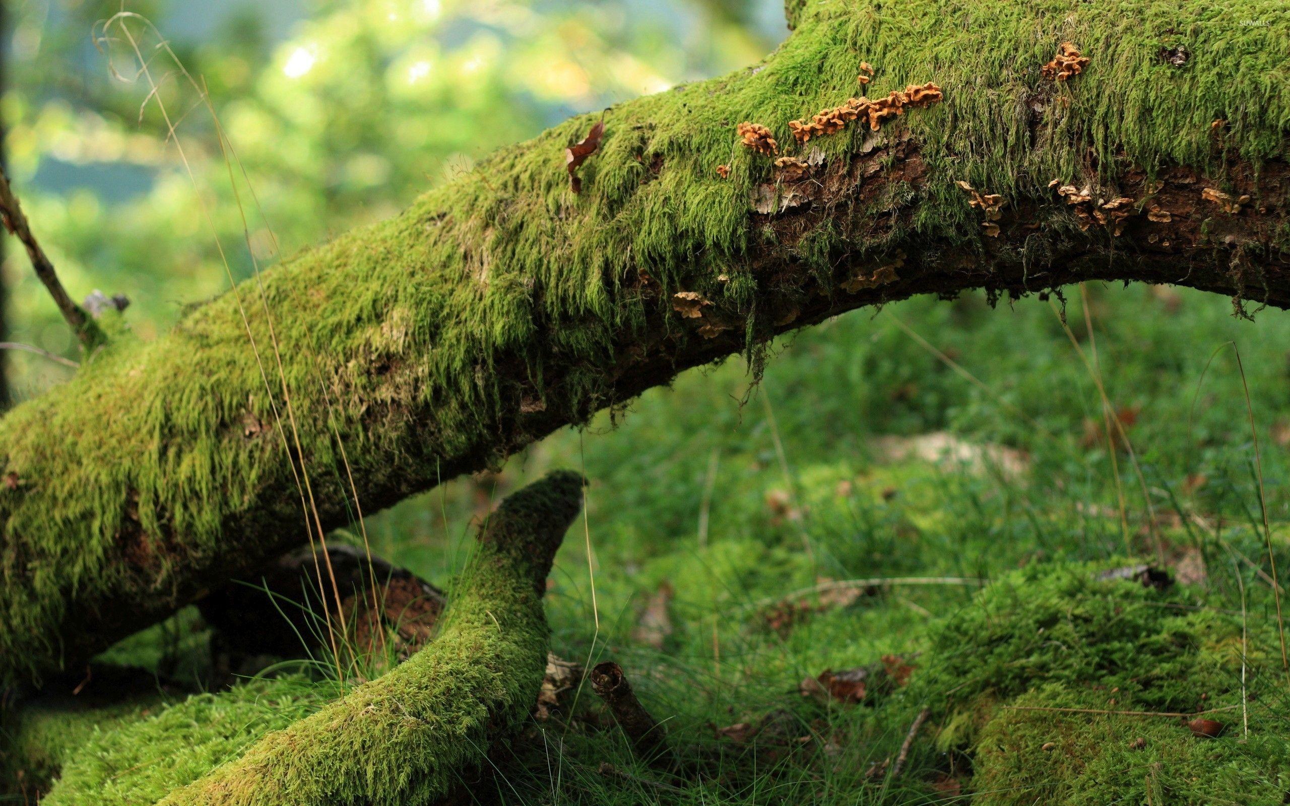 Mossy Tree 2 Wallpaper Mossy Tree Forest Plants Green Landscape