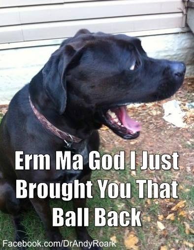 Erm ma god - this black lab can retrieve!