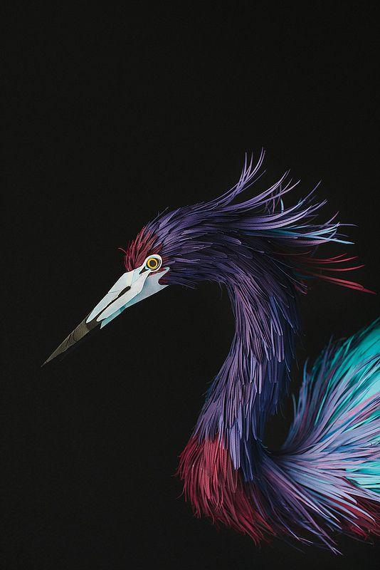 Little blue heron - Diana Beltran herrera #paper #DianaBeltran #Heron #BirdsofPrey #BirdofPrey #Bird of Prey #LIFECommunity