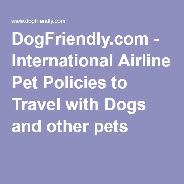 6 Helpful Tips For Moving Abroad With Pets Work abroad