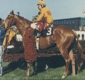 Dust Commander Kentucky Derby Winner   Thoroughbred racehorse ...