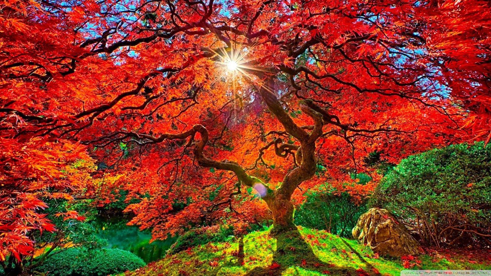 Colours Japanese garden, Paradise landscape, Patio