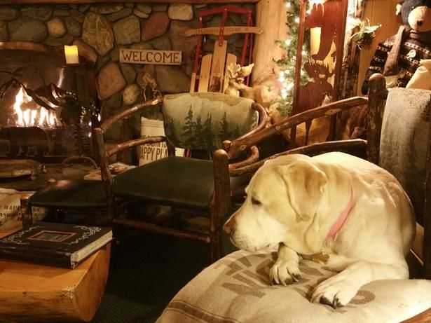 The Cozy Fireside Lodge Bed And Breakfast Of South Lake Tahoe Ca Will Treat You And Fido Like Family Pet Friendly Hotels Lodge Bedding Pet Area