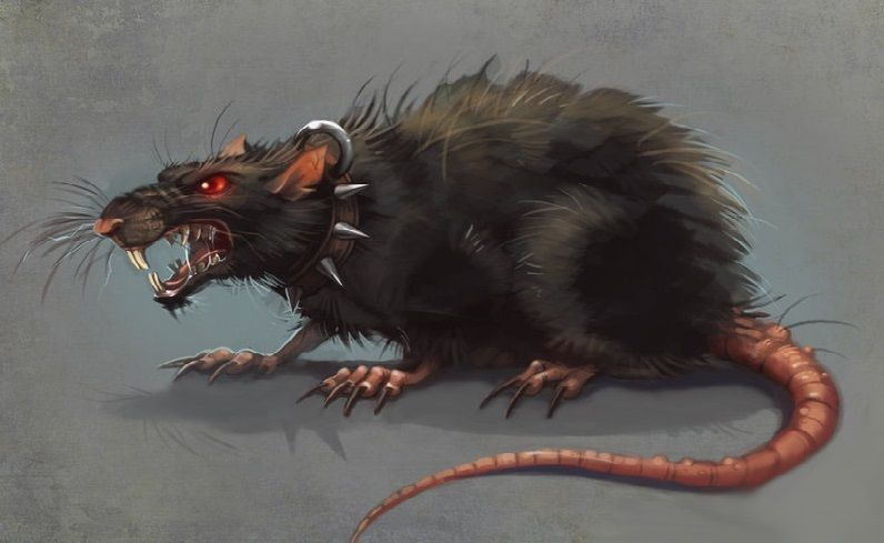 Image result for Evil rats