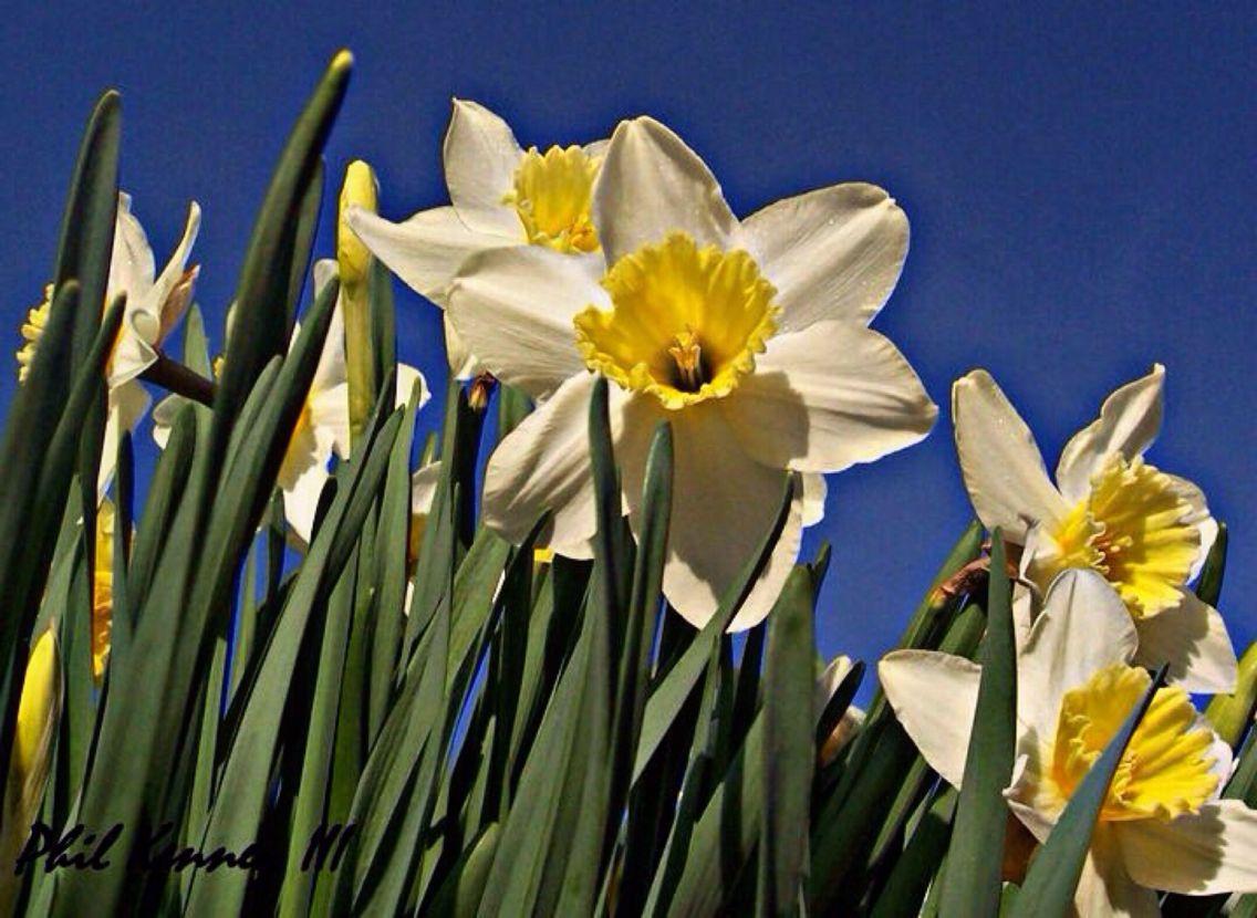 Beginning of Spring on Aquidneck Island