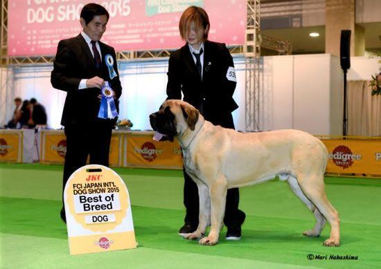 Massive Dogsの犬たち 犬 可愛い犬 可愛い