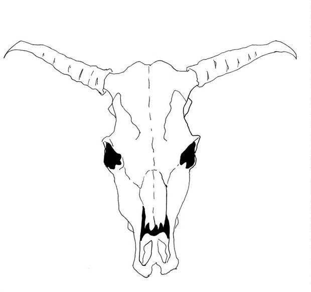 How To Draw A Cow Skull For Georgia O Keeffe In 2019 Cow