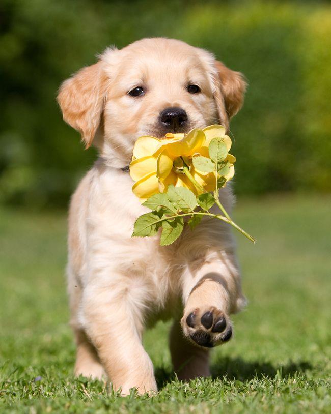 Na Psim Tropie Rosliny Trujace Dla Psa Cute Animals Pets Puppies