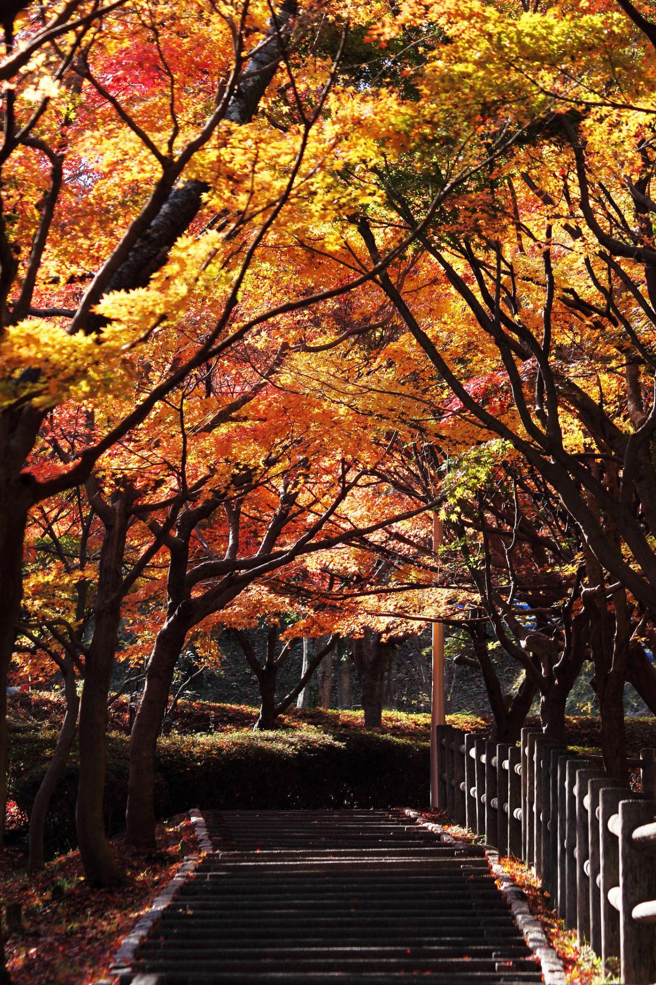 Autumn aesthetic, autumn vibes, fall vibes, fall aesthetic