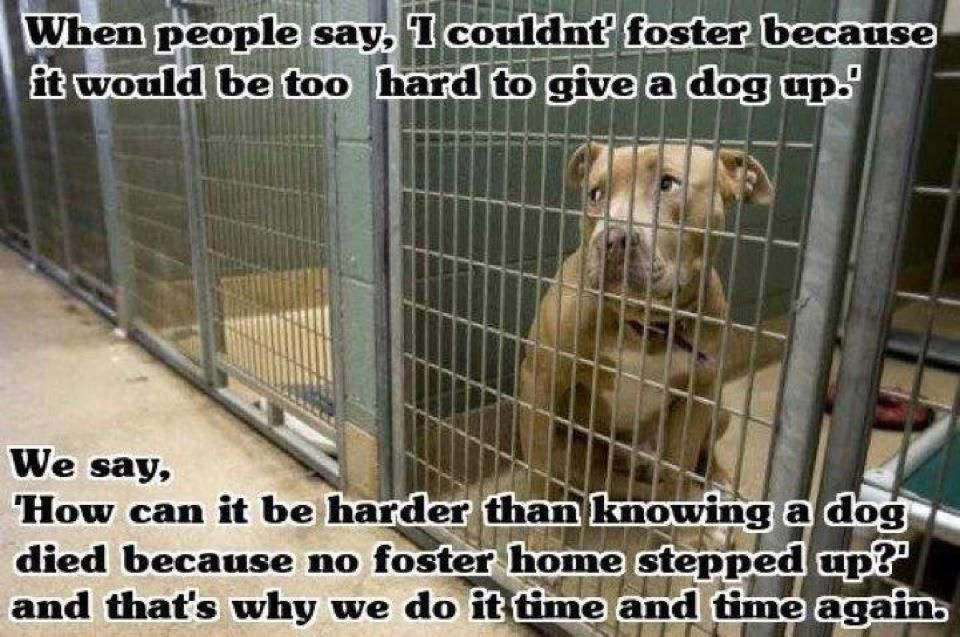 Adopt Immediate Foster Homes Needed On Foster Dog The Fosters