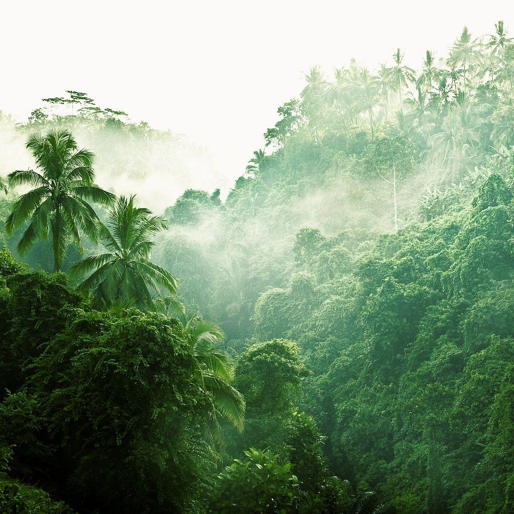 Bali Rainforest Bali Love Pinterest Places Bali And Exotic Places