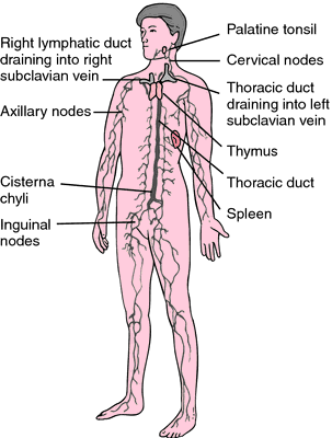 Pin by mulholland on Pictures | Pinterest | Lymph nodes, Medical ...