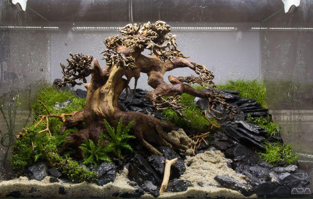 Freshwater Fish Tank Ideas   Aquascape Inspiration, 2020