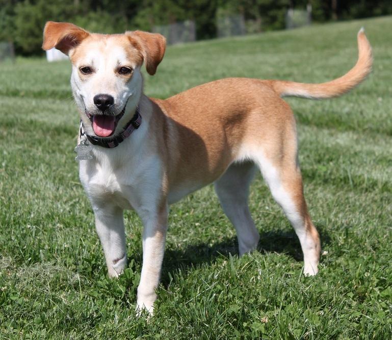 Adopt Ally on Labrador retriever, Retriever dog