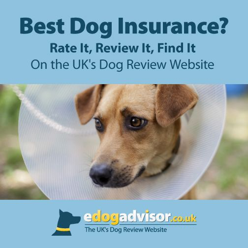 Dog Dogs Edogadvisor Reviews Dog Insurance Pet Insurance