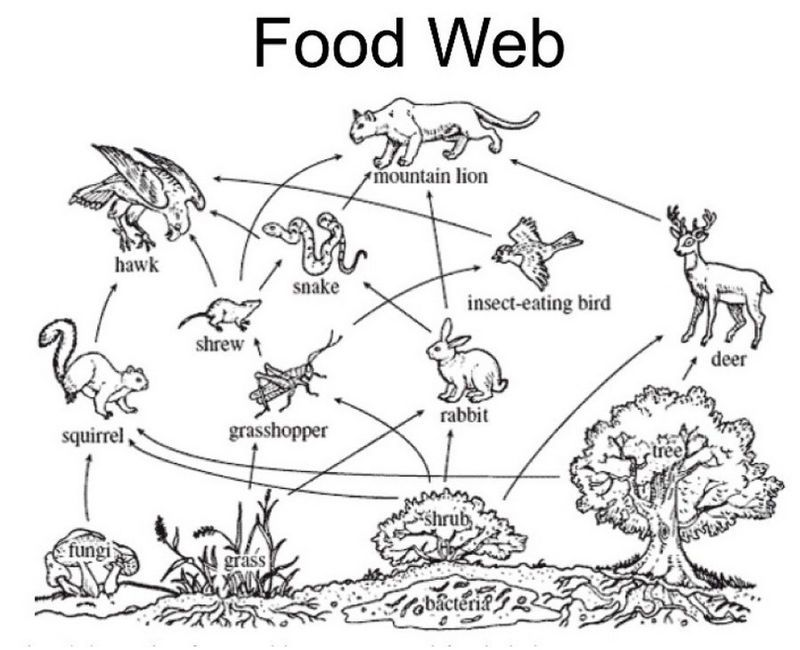 Forest Food Pyramid Project Science Project Education Com Elementary Science Food Web Science Biology