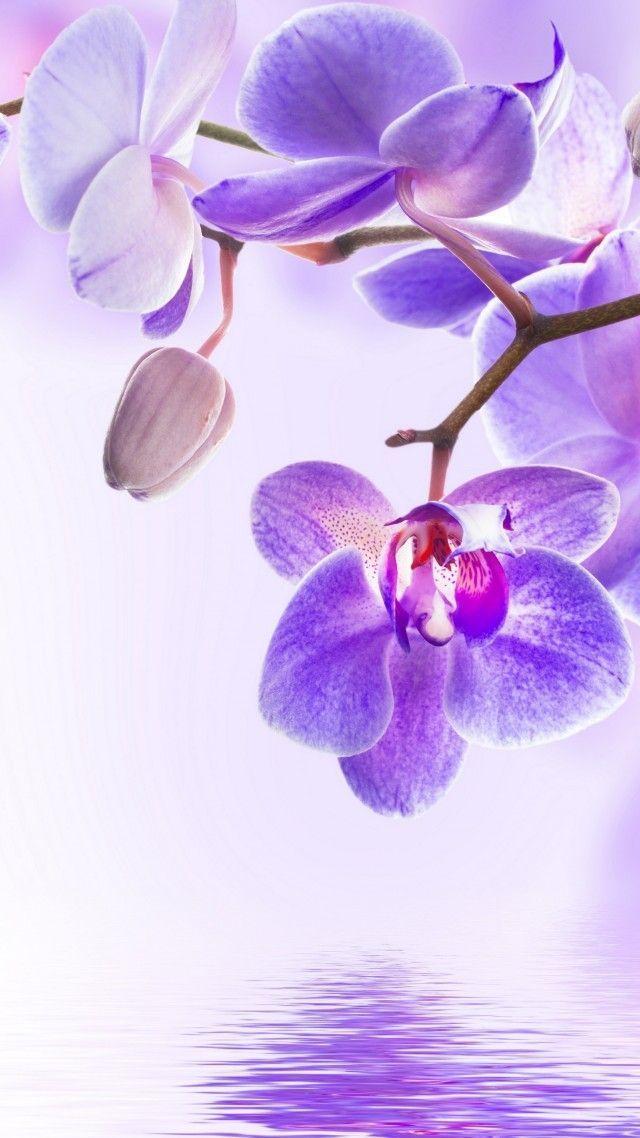 Cvetok Orchid Flower 4k Vertical New Ideas Orchid Wallpaper Flower Wallpaper Orchid Photography