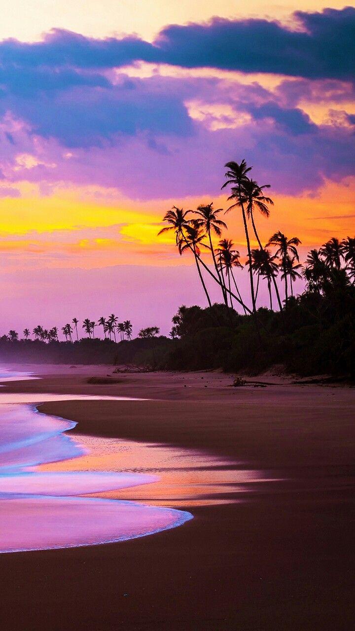 Amazing Beach Photography Wallpaper Hd Sea Coast Beach Tree Sunset Wallpaper Hd Photography Pint Beach Wallpaper Beautiful Wallpapers Summer Wallpaper