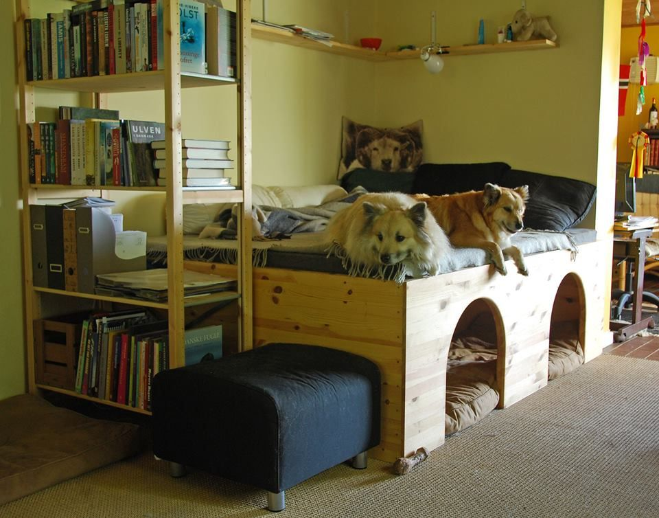 Pin By Shannon On Bow Wow Meow Dog Bunk Beds Dog Bed Frame Dog Bed Furniture