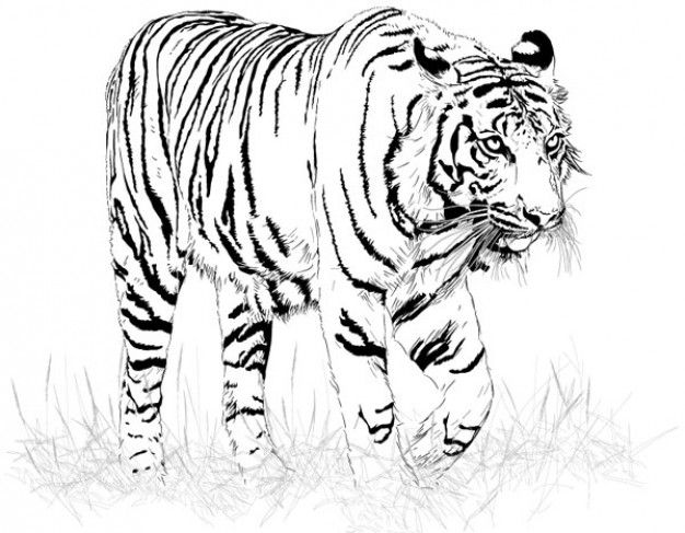 Black And White Tiger Silhouette Tiger Vector White Tiger