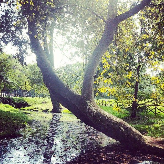 Sparkle of #nature ... #Milan #italy #sempione