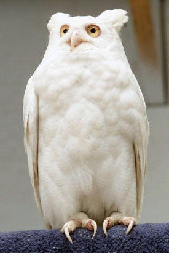 Shangrala's Amazing Albino Animals