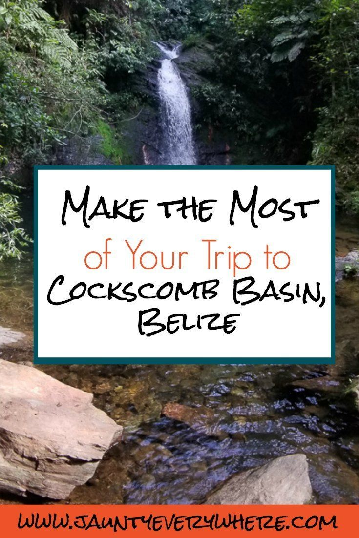 Make The Most Of Your Trip To Cockscomb Basin, Belize