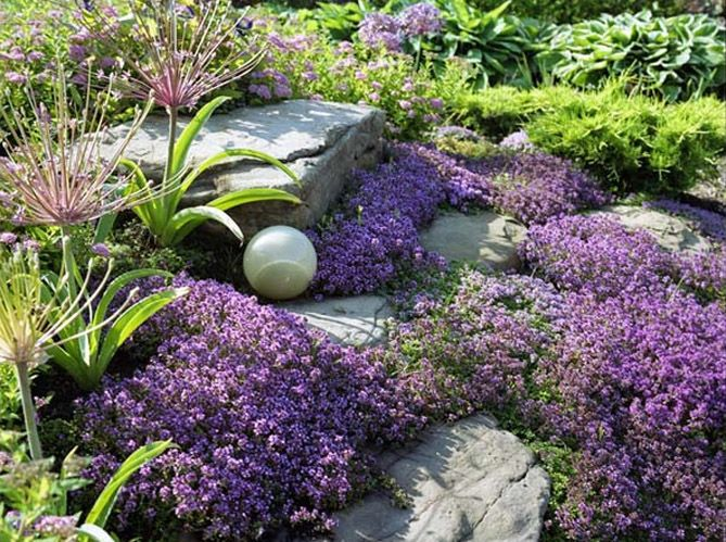 Comment Créer Un Massif Fleuri Zen ? | Le Massif, Massif Et Fleuri