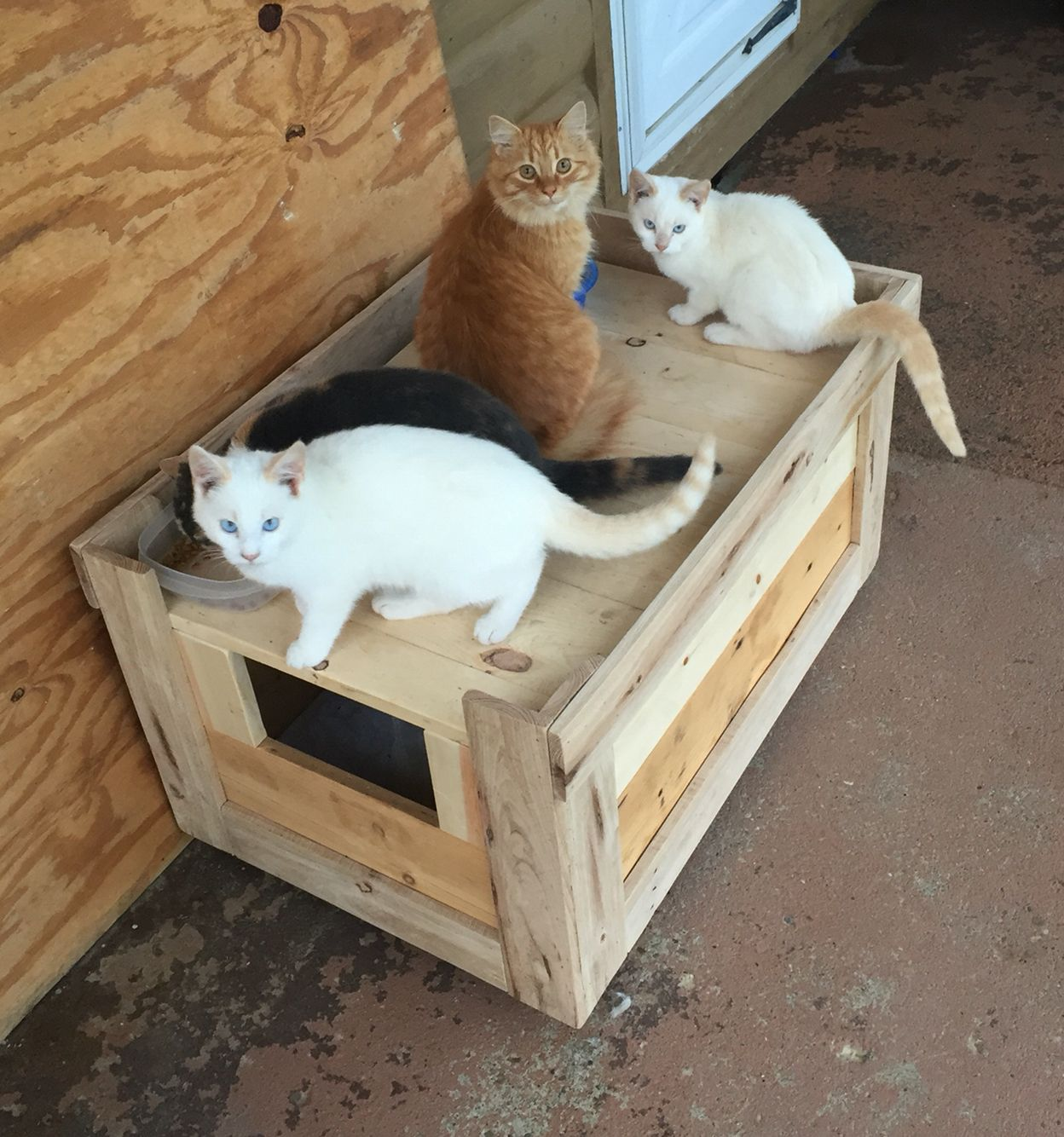 Outdoor Cat house made with pallet boards and small shipping crate