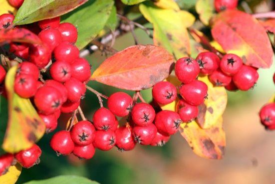 6 beliebte immergrüne Pflanzen für den Garten #immergrünesträucher
