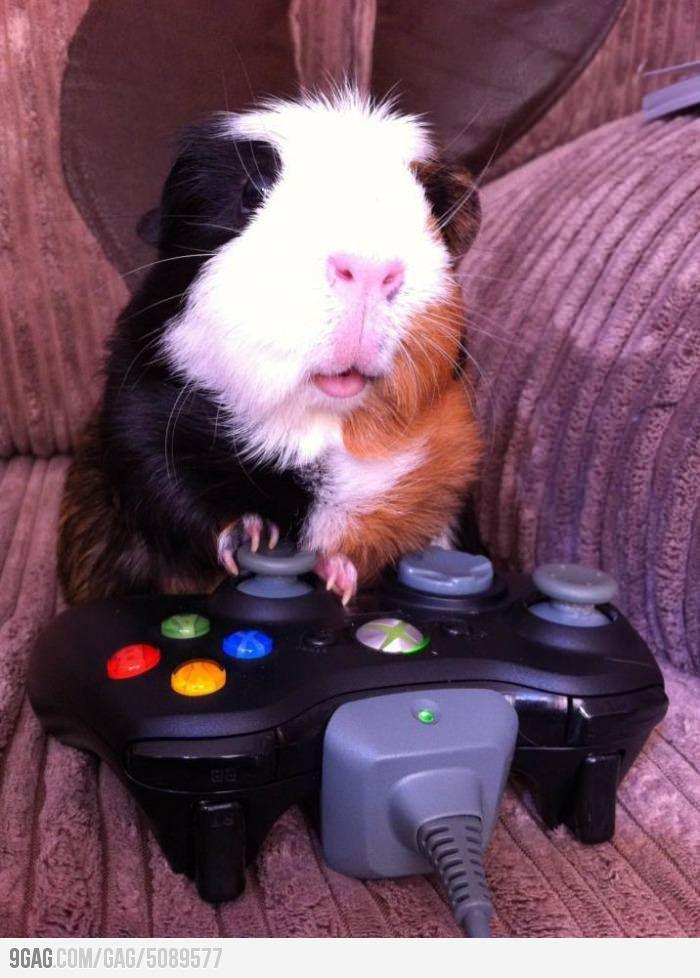 Mom I Can T Pause Online Games Bichinho De Estimacao