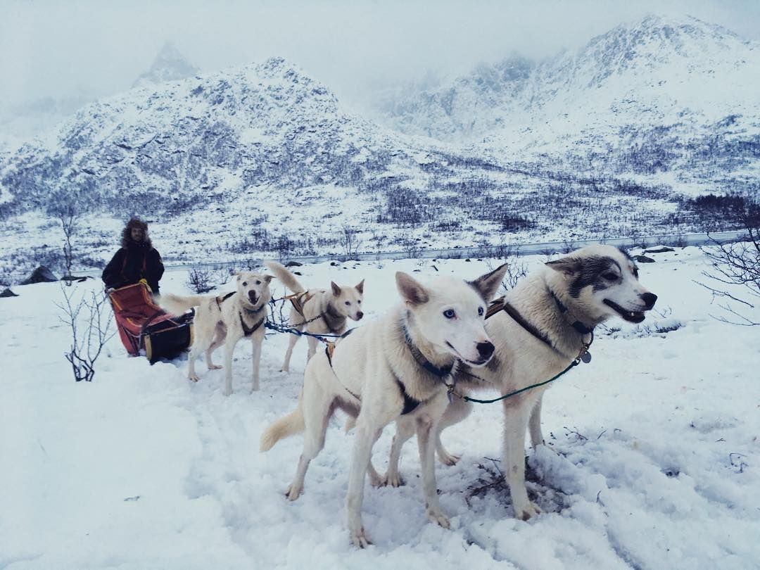 How To Train Your Dog To Pull A Sled Easiest Dogs To Train Dog