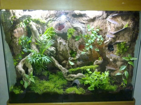 Dart frog tank build reptile forums terrarium ideas for Fish tank frogs