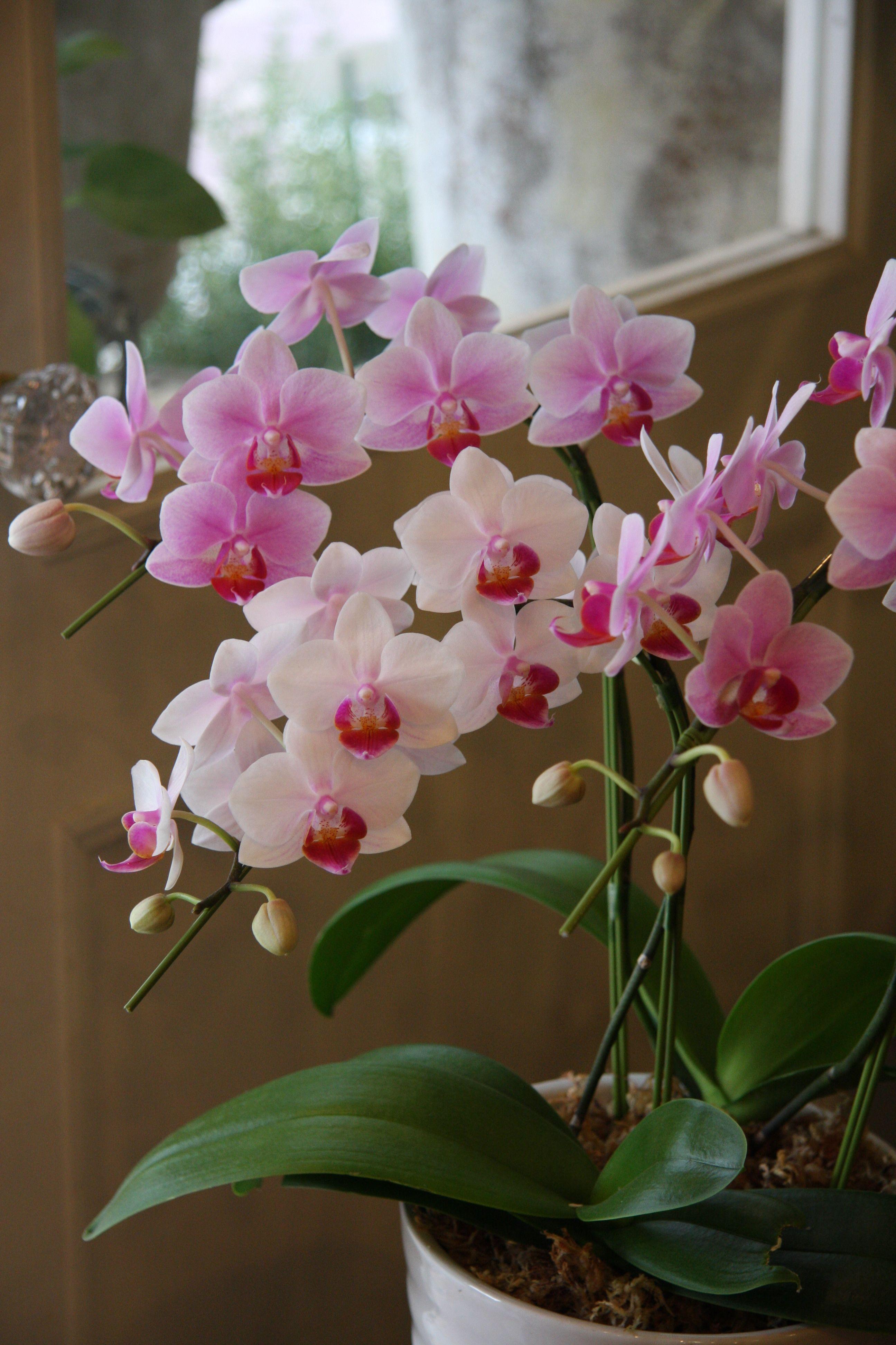 даже орхидея с мелкими цветами название часто встречающимся