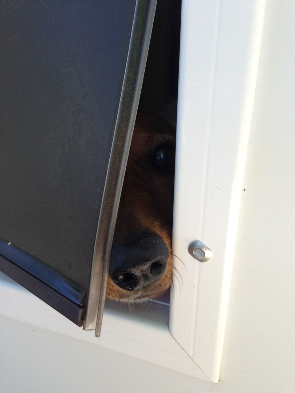 Can I come outside