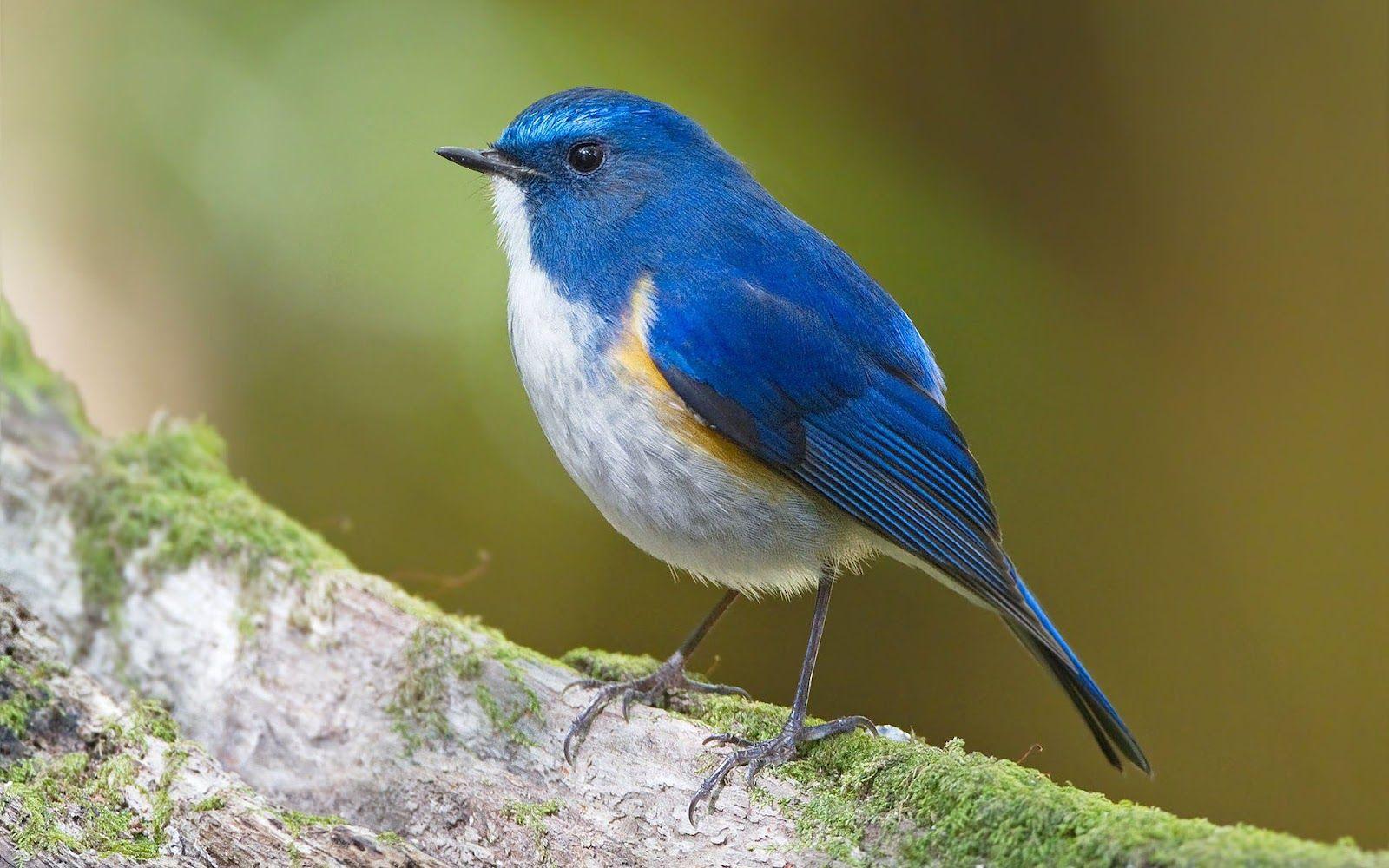 zijaanzicht vogel v1d inspiratie vissen en vogels pinterest
