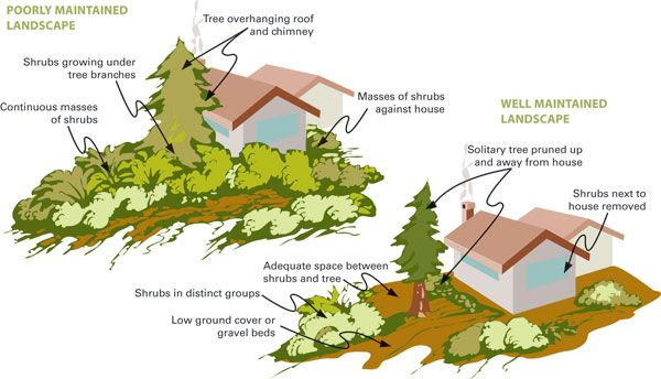 Fire Resistant Landscaping Saves Utah Homes In 2021 Acreage Landscaping Landscape California Plants
